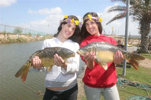 דגי קרפיון שהוצאו מבריכות הדגים. צילום: עופר שנער