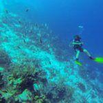 קורס צלילה מקצועי באוניות Royal Caribbean