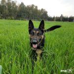 הכלבות המשטרתיות  קויה וספידי נלחמות בנגע הסמים