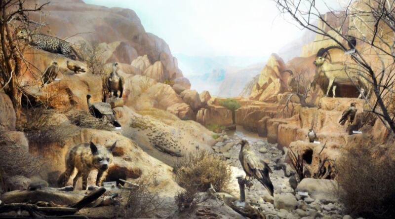 במוזיאון האדם והחי