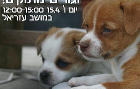 מעל 500 כלבים חסרי בית ממתינים לאימוץ