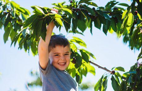 קטיף עצמי בבוסתן בראשית בגולן  פירות יער, נקטרינות, אגסים ועוד