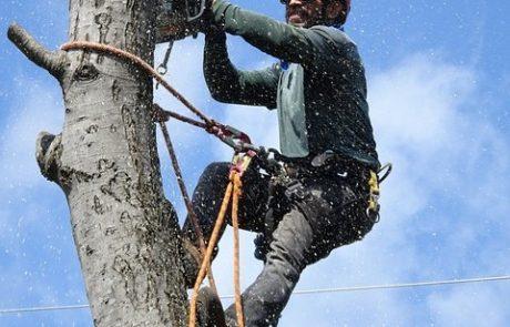 מתי צריך לכרות עץ ואיך עושים את זה?