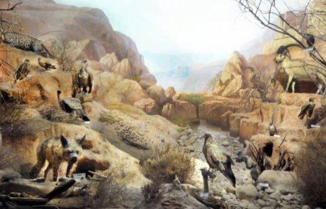 לפגוש את עולמם של חיות הפרא ולצאת למסע בזמן אל עולמם של הדינוזאורים