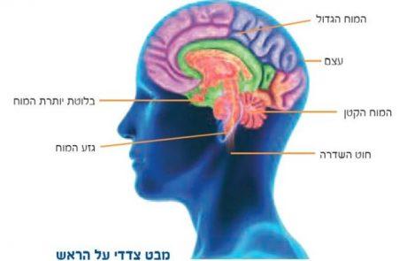 רגשות המוח האנושי משפיעים על כיווני פיתוח הטכנולוגיות המתקדמות