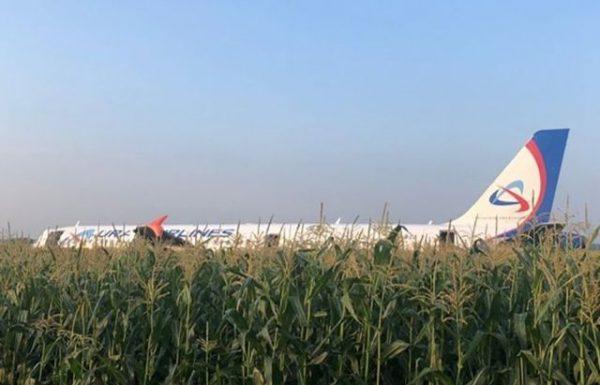 ציפורים גרמו למטוס אורל איירליינס לנחות בשדה תירס