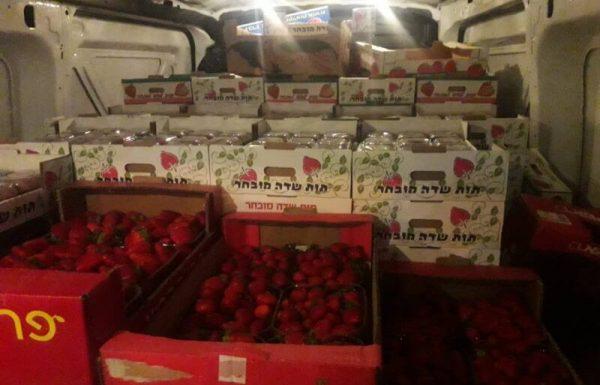 נתפסו כ-8 טון של תותים ב-5 ניסיונות שונים להברחת תותי שדה מעזה