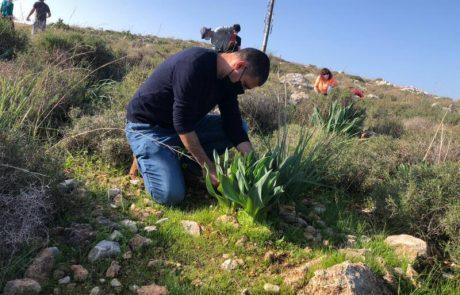 מתנדבים להצלת צמחייה בשטח המיועד לבניה באלפי מנשה
