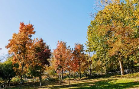 אלו עצים כדאי לשתול בחורף  בצורה היעילה והנכונה ביותר