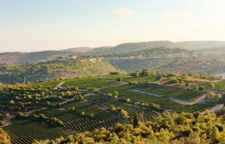 בקשה להכרה במטה יהודה כחבל יין עולמי