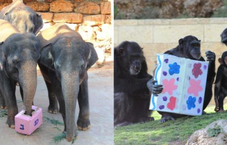 """משחקי העשרות בחנוכה בגן החיות התנ""""כי בירושלים"""