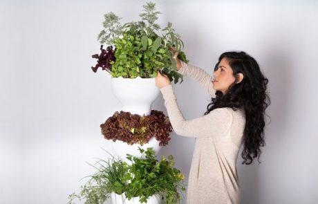 iPonic משיקה מערכת לגידול צמחייה לגובה ללא אדמה