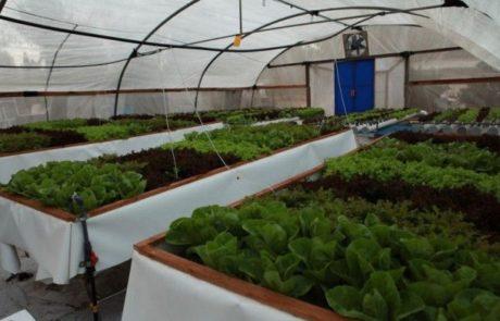 חדש ירוק חשוב וטרנדי – חקלאות עירונית