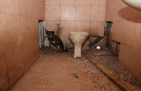 התעללות קשה בבעלי חיים במושב קדרון