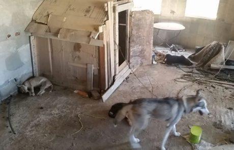 באו לחפש נשקים וגילו הזנחת כלבים חמורה