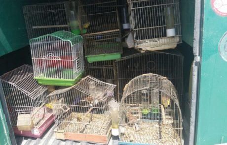 תושב חברון נעצר בחשד לכליאת ציפורים מוגנות