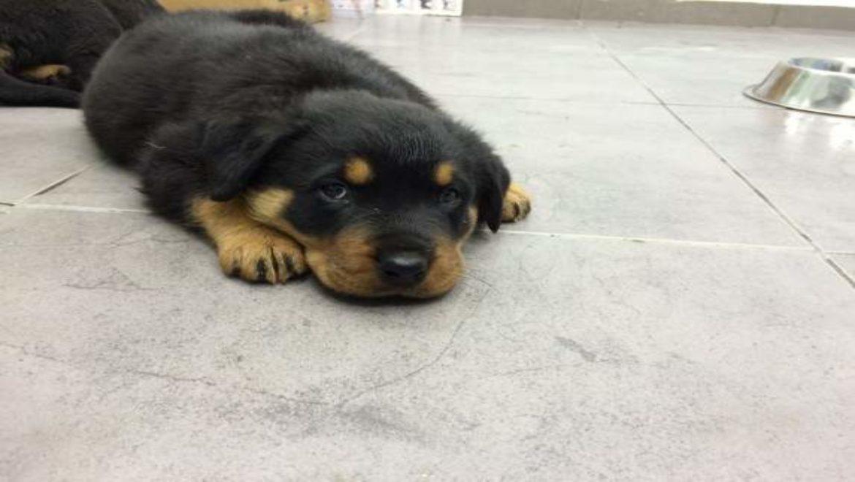 משרד החקלאות מזהיר אל תגישו לכלבכם מזון של ביו דוג