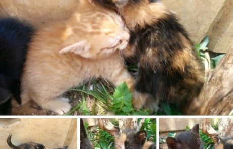 עשרות גורי חתולים נמצאו בפחי אשפה באריאל