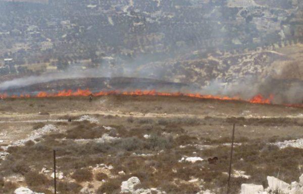עשרות עצים ניזוקו בהצתה ביצהר