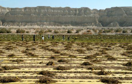 30 מיליון שקלים יועברו לחקלאים בארץ