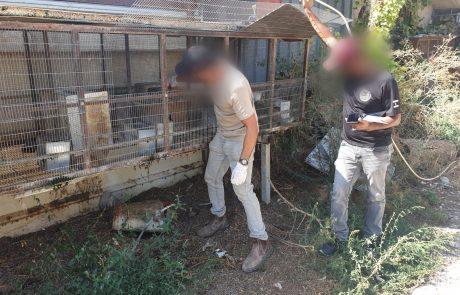 מעצרים בקלאנסווה: סמים, נשק והזנחת בעלי חיים