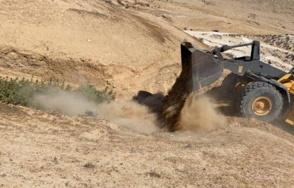 """המשטרה השמידה מריחואנה שגודלה בשטחי אש של צה""""ל"""