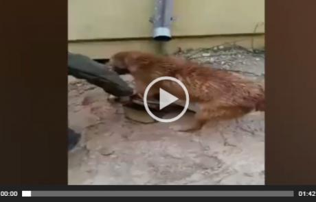 מרגש – כלבה וחיילים מצילים גורים מטביעה בעקבות הסערה