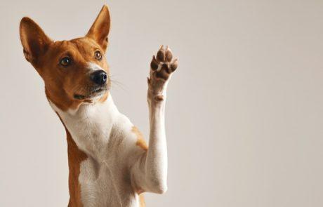 החלפתם את הקולר של הכלב ברתמה? אל תוותרו על הקולר בכל מקרה