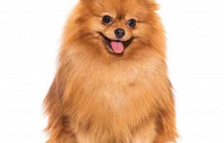 פדים לכלבים – כיצד הם עוזרים?