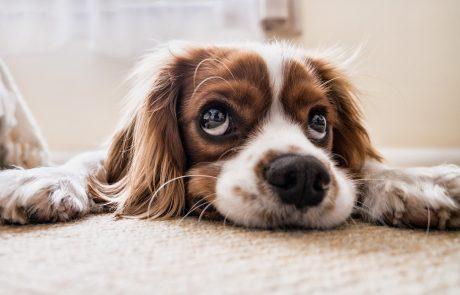 תופעה עצובה: הציבור נוטש בעלי חיים מבהלת הקורונה