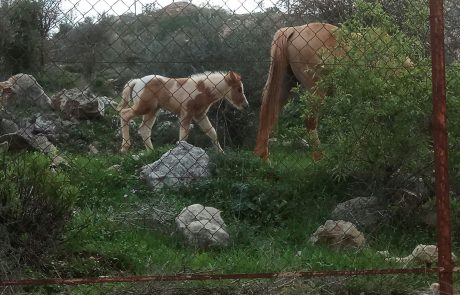 רק אם יקרה אסון ישקלו לנעול מחדש את השער של החי בר באריאל