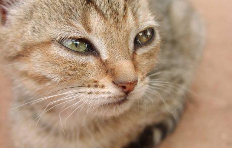 כתב אישום נגד עודד פיינגולד שבעט באכזריות בחתולה