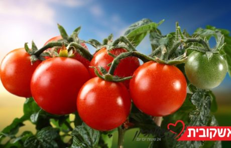 קונפי עגבניות שרי