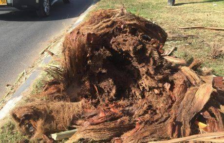 זהירות עצים נופלים לפניך