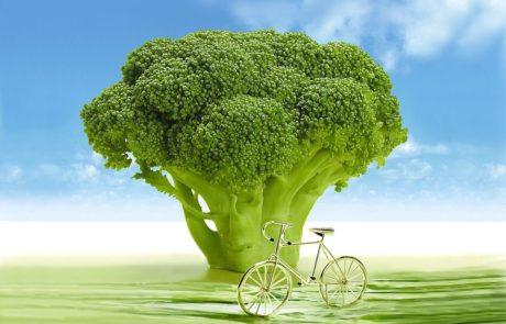 הכנו עבורכם רשימה של 10 מאכלים בריאים ויעילים