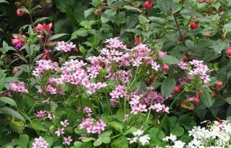 החמציצים שיענגו לכם את הגינה